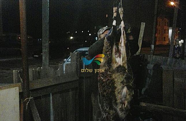 במשחטה מאולתרת שהקומה באומן עסקו אמש (שני) בשחיטת כבשים לכבוד חג הפסח באומן