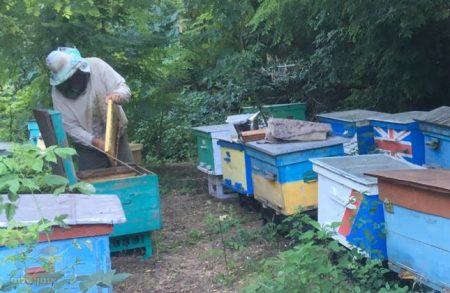ההכנות באומן בעיצומן: השבוע החלו בייצור דבש מקומי לאלפי הסועדים